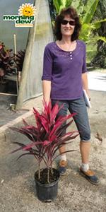 Red Pepper Cordyline